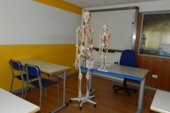 A 2 scheletri interi