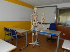 A-2-scheletri-interi