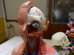 N-cranio-con-occhio-da-torso-frontale