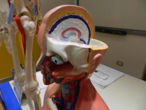 O-cranio-con-occhio-da-torso-laterale